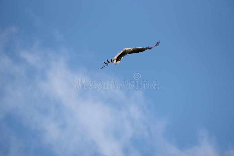 Wildlife birds watching in Danube Delta , Romania. Wild nature royalty free stock photography
