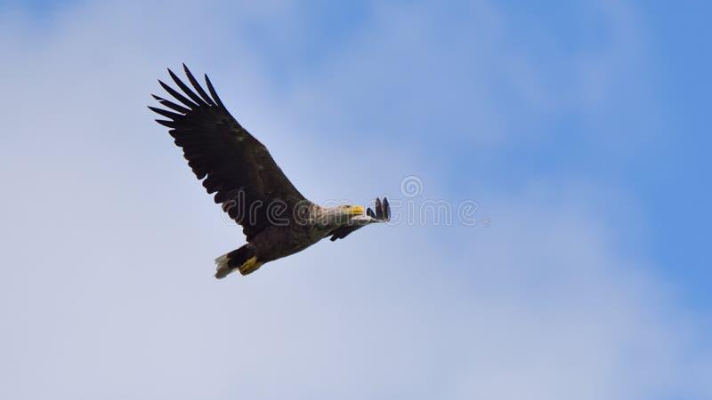 Wildlife birds watching in Danube Delta , Romania. Wild nature stock photos