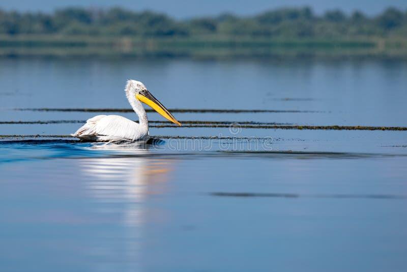 Wildlife birds watching in Danube Delta , Romania. Wild nature stock images