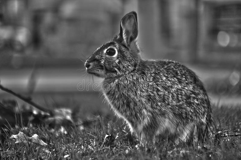 Wildlife, Black, Black And White, Fauna royalty free stock images