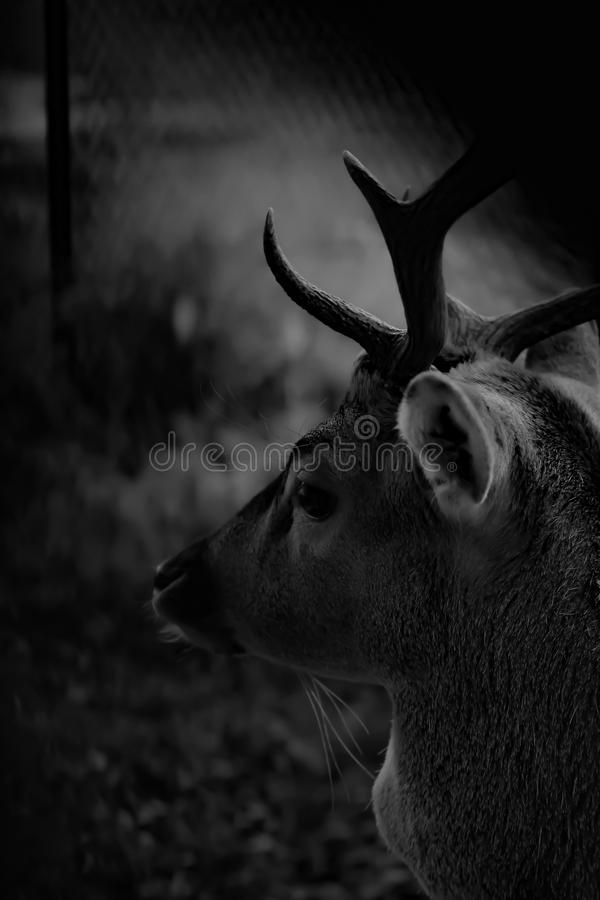 Wildlife, Black, Black And White, Monochrome Photography royalty free stock photos