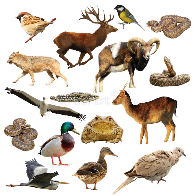 Free Wildlife Collection Over White Stock Image - 80186001