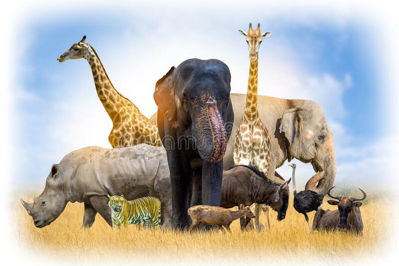 Wildlife Conservation Day Wild animals to the home. Or wildlife protection stock images