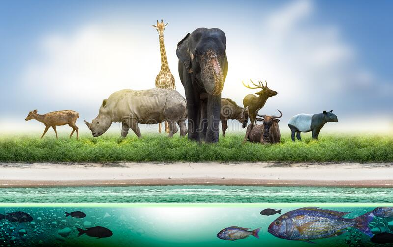 Wildlife Conservation Day Wild animals to the home. Or wildlife protection royalty free stock photos