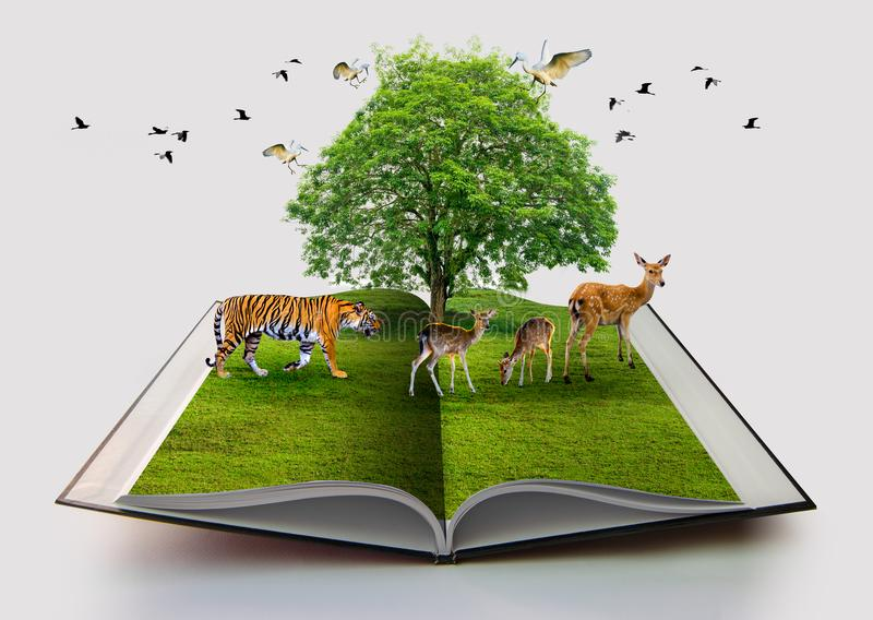 Wildlife Conservation tiger Deer Bird environment book of nature isolated on white open book in paper recycling 3d rendering book. Of nature with grass and tree stock image