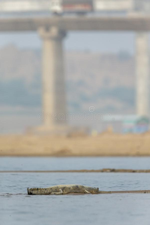 Wildlife and developments,Chambal River,Rajasthan,India stock photos