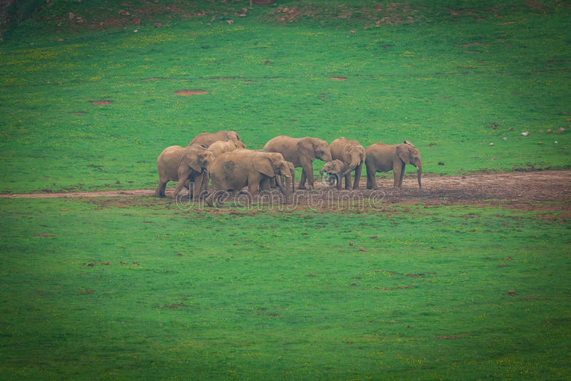 Wildlife Elephants family in safari in Africa. Wildlife Elephants family in safari in Africa royalty free stock photography