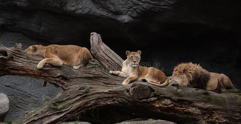 Wildlife, Fauna, Mammal, Terrestrial Animal stock images