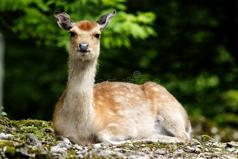 Wildlife, Fauna, Mammal, Terrestrial Animal stock photo