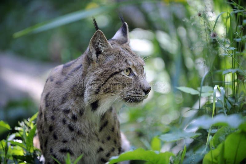 Wildlife, Fauna, Mammal, Terrestrial Animal royalty free stock photography