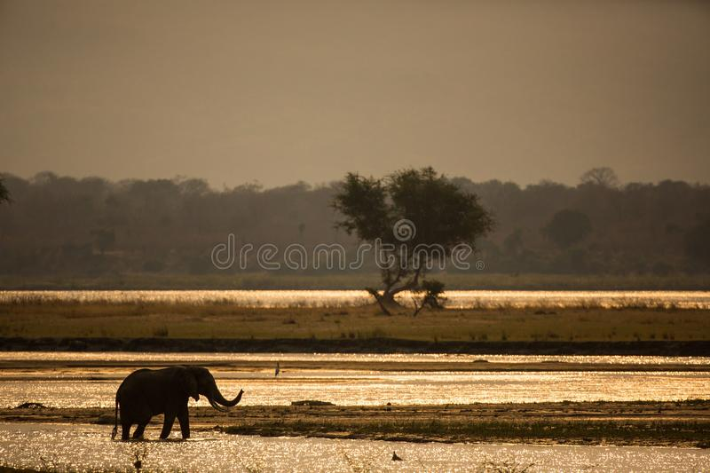 Wildlife, Field, Morning, Grass stock photography