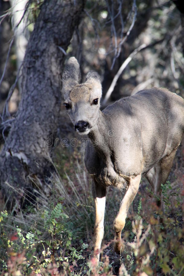 Wildlife at Grand Canyon stock images