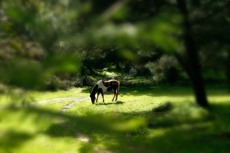 Wildlife landscape