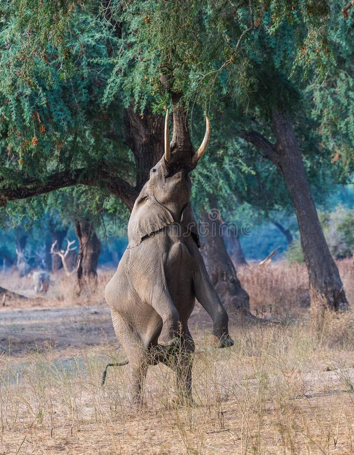 Wildlife, Mammal, Fauna, Terrestrial Animal royalty free stock photo