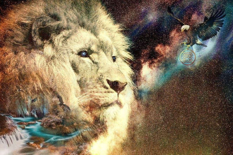 Wildlife, Mammal, Lion, Fauna stock image