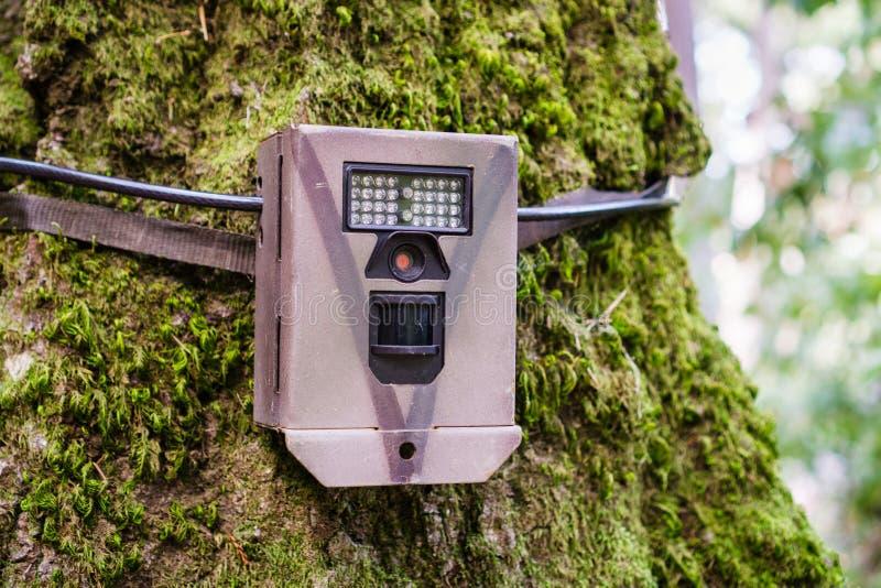 Wildlife monitoring device strapped on the base of a tree trunk, Santa Cruz mountains, San Francisco bay area, California royalty free stock photos