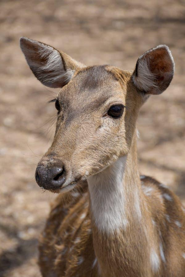 wildlife imagens de stock royalty free