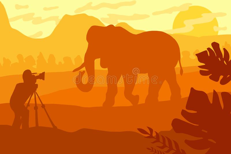 Wildlife, nature photographer flat vector illustration. Wildlife photographer flat illustration. Minimalistic evening panorama with elephant silhouette royalty free illustration