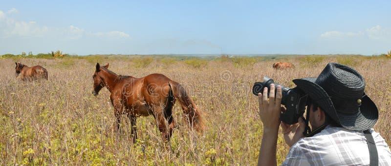 Wildlife photographer stock image