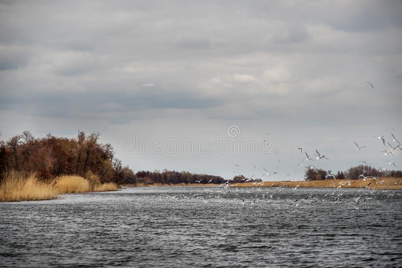 Wildlife of the river and the birds above the water. Dnieper River Delta. National park. royalty free stock photography