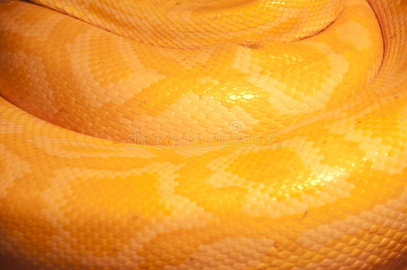 Wildlife Snake Skin Pattern. A Yellow Wildlife Snake Skin Texture royalty free stock images