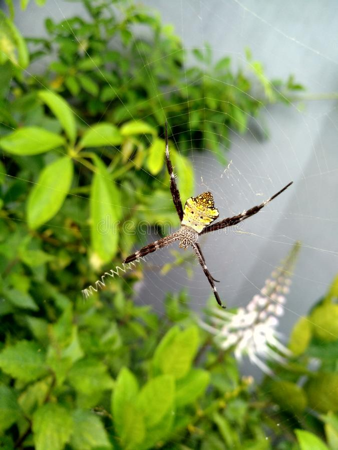 Wildlife spider stock photos