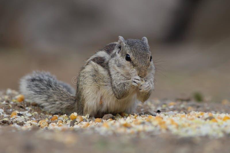 Wildlife squirrel minimal stock photography