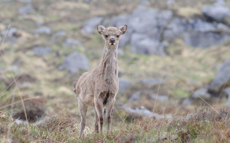 Wildlife, Terrestrial Animal, Fauna, Mammal stock image