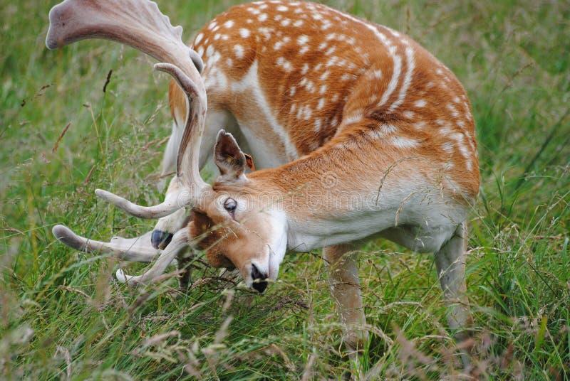 Wildlife, Terrestrial Animal, Mammal, Fauna royalty free stock photos