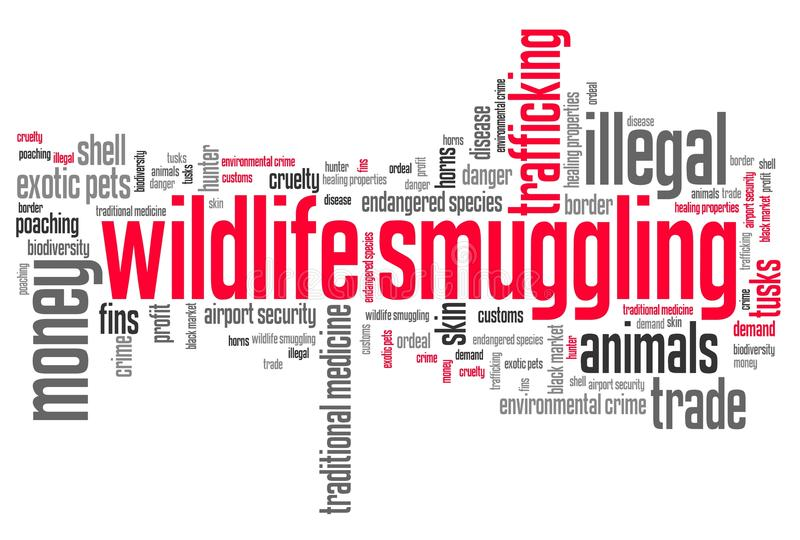Wildlife trafficking. Wildlife smuggling - environmental crime issues and concepts word cloud illustration. Word collage concept vector illustration