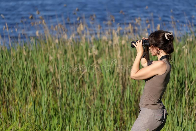 Download Wildlife watching stock photo. Image of observe, trees - 25538796