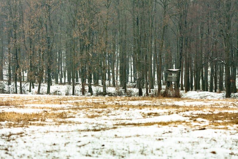 Download Wildlife watching hut stock photo. Image of wild, house - 20081688