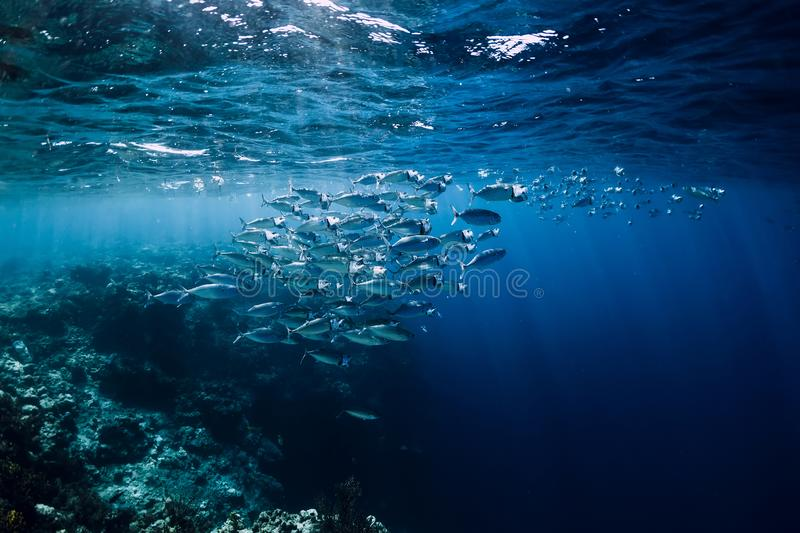Wildlife world in underwater with school fish in ocean at coral reef stock photo