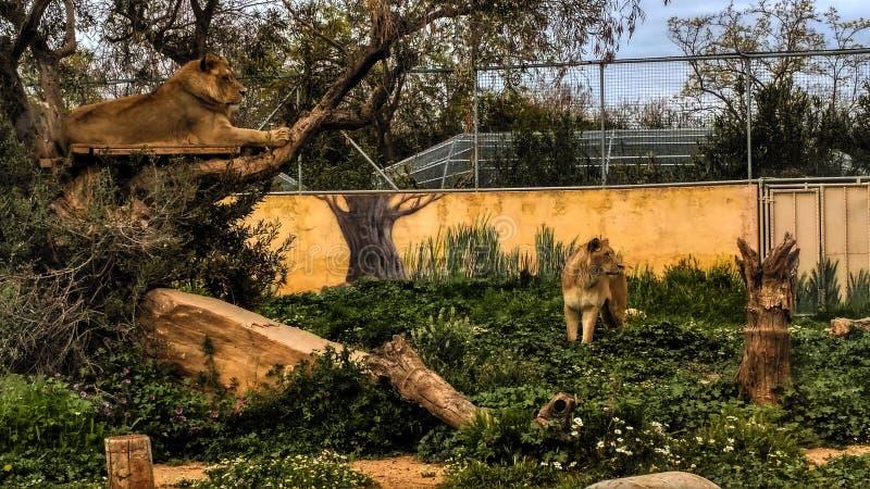 Wildlife, Zoo, Fauna, Tree stock photo
