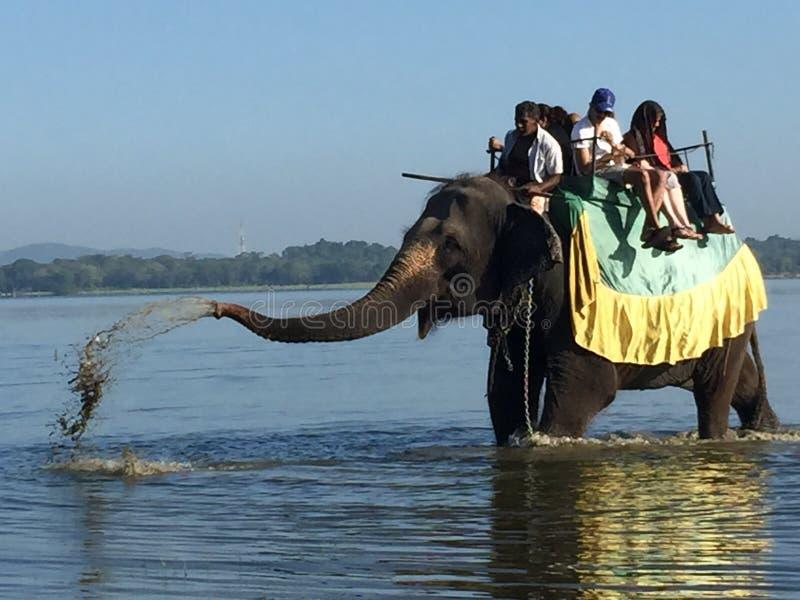 Wildness van Sri Lanka royalty-vrije stock foto