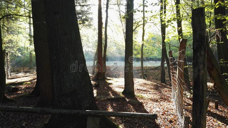 Wildpark fotografia de stock