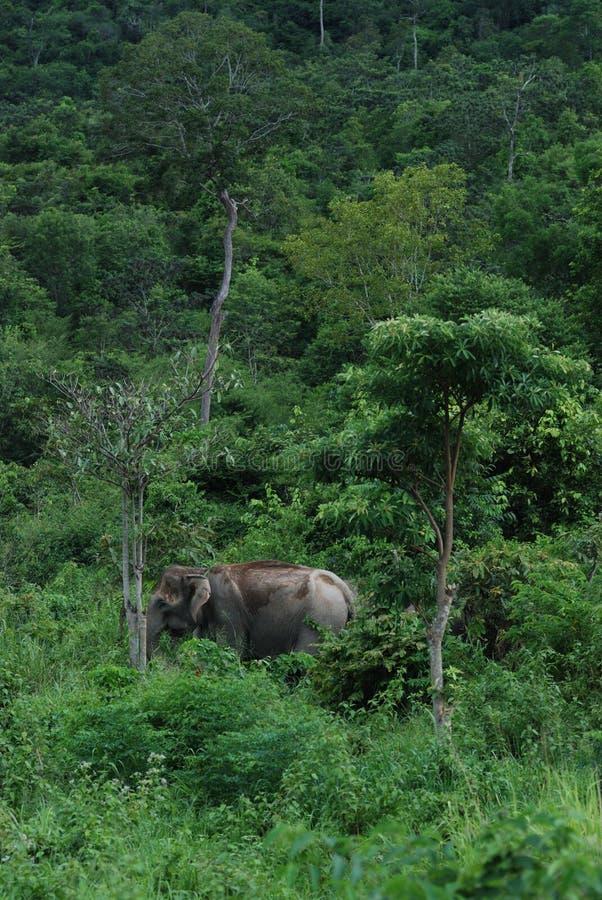 Wilds Elephant Stock Image