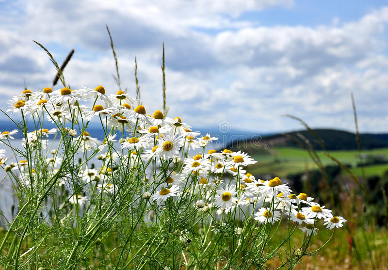 Download The wilds of Scotland stock photo. Image of hill, flower - 10454790