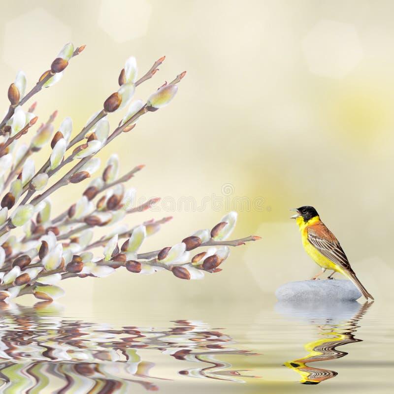 Wilgentakken en het zingen vogel in het water wordt weerspiegeld dat royalty-vrije stock foto