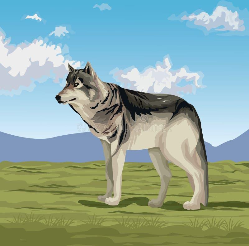 Wilk w dolinie ilustracji