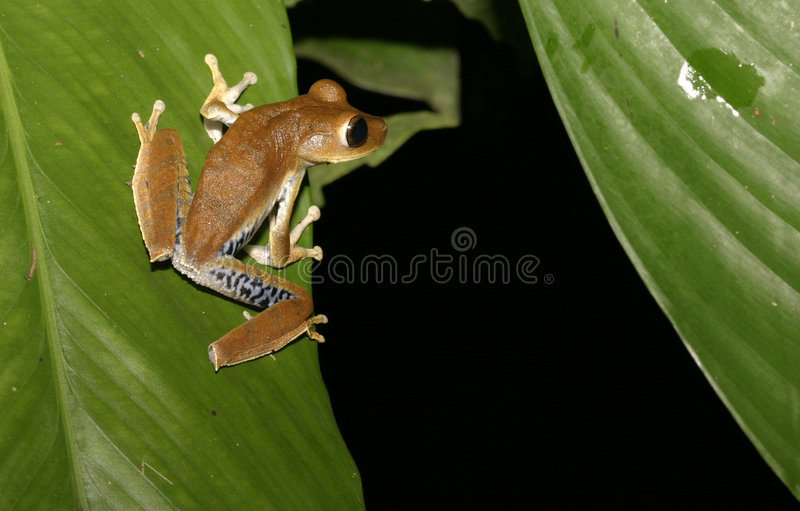 Download Will I make it that far stock photo. Image of tropics, amphibian - 170684
