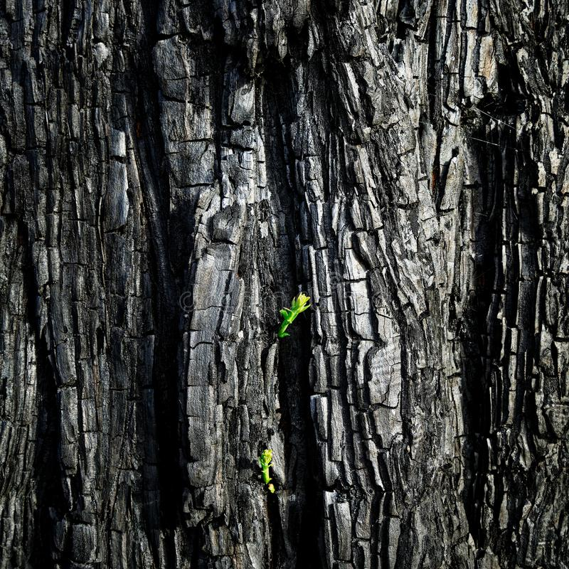 The will to survive after the forest fire, New Zealand stock images