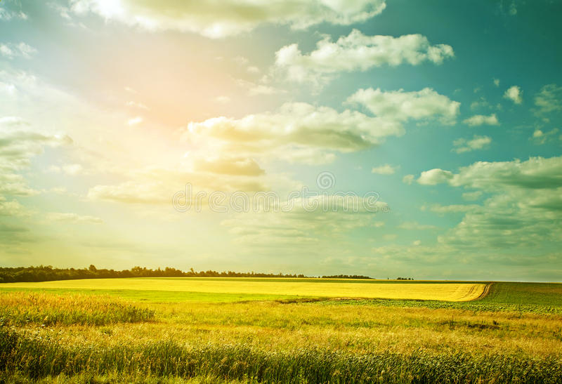 Download Willage wheat field stock photo. Image of panorama, cloudy - 26216474