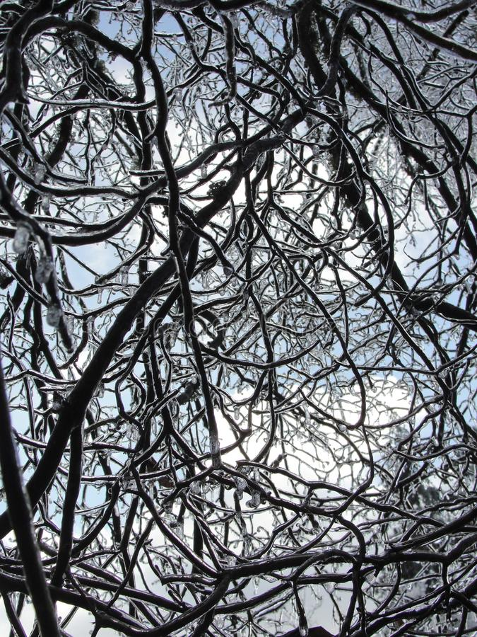 Willamette Valley, Oregon - January 06 2016: Ice storm.  royalty free stock photography