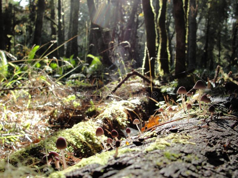 Willamette Valley, Oregon - November 05 2012: South Hills of Lane County.  royalty free stock image