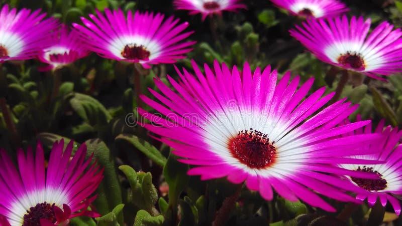 Willekeurige bloem stock afbeelding