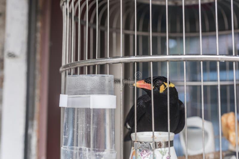 Willend vrij zijn, een vogel die in een kleine vogelkooi gesloten is stock afbeeldingen