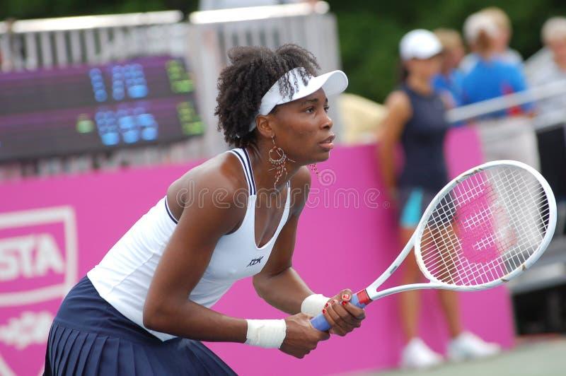 Williams Venus - gran campeón (9) foto de archivo