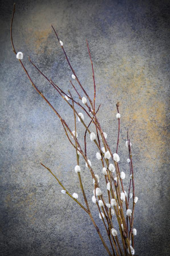 Willow branch on vintage background,grey,brown,willow,vintage,retro,grunge royalty free stock image