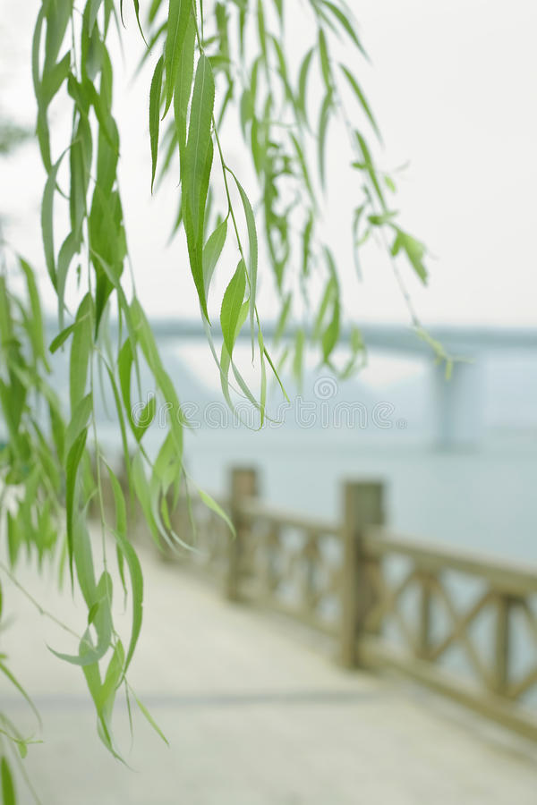 Download Willow branches stock photo. Image of architecture, landscape - 16029258